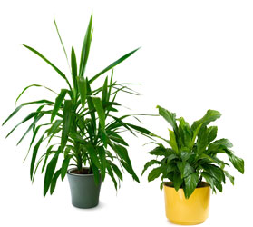 Tropical House Plants from Scott's Flowers on the Square in Stephenville, TX