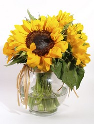 Sunny Sunflowers from Scott's Flowers on the Square in Stephenville, TX